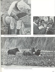 Page 179, 1970 Edition, University of Florida - Tower / Seminole Yearbook (Gainesville, FL) online yearbook collection