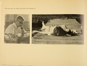 Page 16, 1967 Edition, Rollins College - Tomokan Yearbook (Winter Park, FL) online yearbook collection
