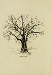 Page 14, 1904 Edition, Meredith College - Oak Leaves Yearbook (Raleigh, NC) online yearbook collection