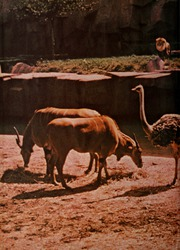 Page 2, 1970 Edition, Ohio State University College of Veterinary Medicine - Chiron Yearbook (Columbus, OH) online yearbook collection