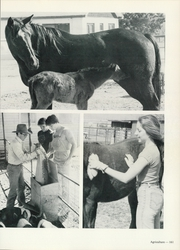 Abilene Christian College - Prickly Pear Yearbook (Abilene, TX) online yearbook collection, 1982 Edition, Page 165